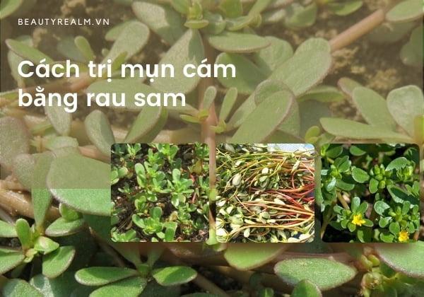 Cách trị mụn cám bằng rau sam