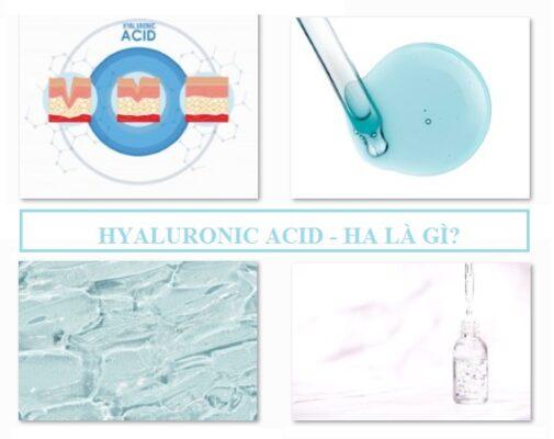 Hyaluronic Acid HA là gì?