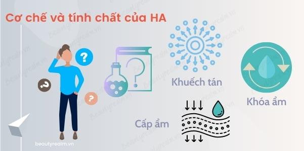 Cơ chế hoạt động và tính chất của HA
